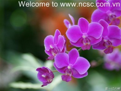 Welcome to ncsc.com.vn !